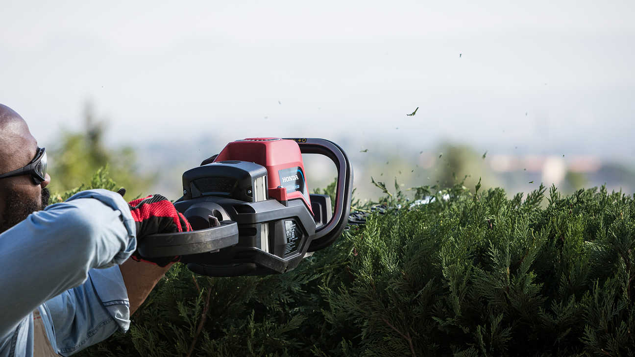 Model trimming the top of the bush with Honda's cordless hedge trimmer.